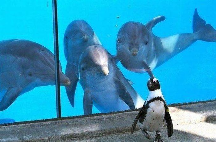 they-want-to-invite-penguin-to-the-key-party