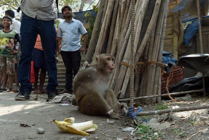 мавпа (2)