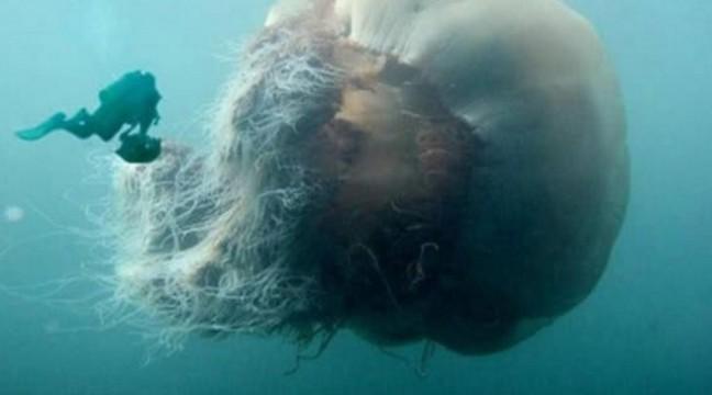 13 фото, після перегляду яких, починаєш боятися води