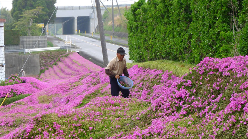 Husband-plants-millions-of-flowers-to-make-his-blind-wife-smile-every-day7-830x467