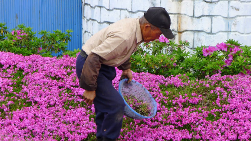 Husband-plants-millions-of-flowers-to-make-his-blind-wife-smile-every-day8-830x467