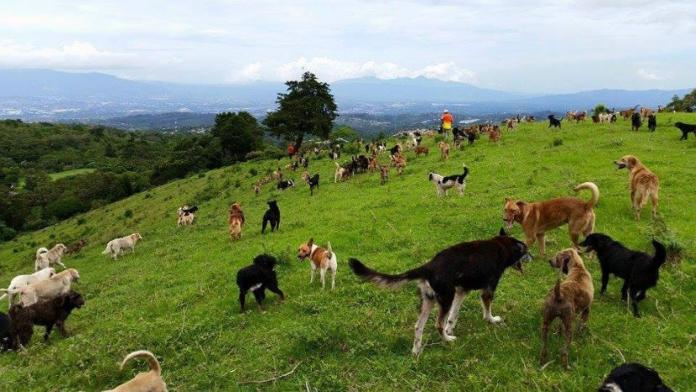 Рай, де живе 900 щасливих собак