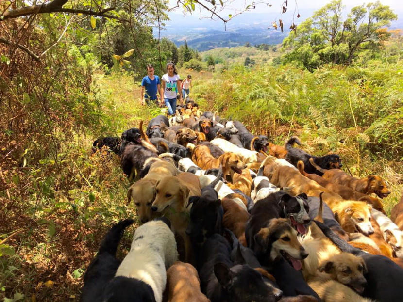 land-of-the-strays-a-paradise-for-900-dogs-where-they-roam-free-and-happy1-830x623