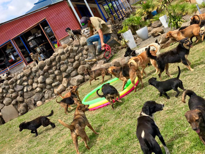 land-of-the-strays-a-paradise-for-900-dogs-where-they-roam-free-and-happy2-830x623