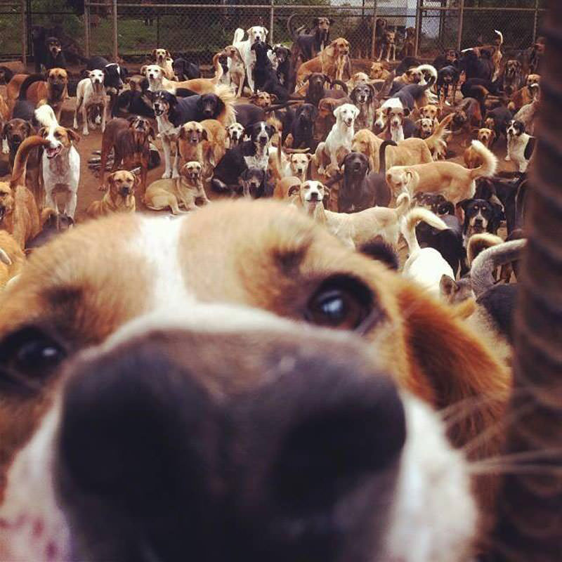 land-of-the-strays-a-paradise-for-900-dogs-where-they-roam-free-and-happy8