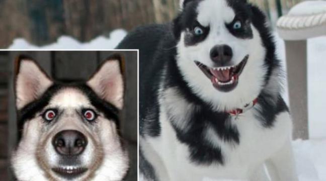 Найемоційніший пес у світі