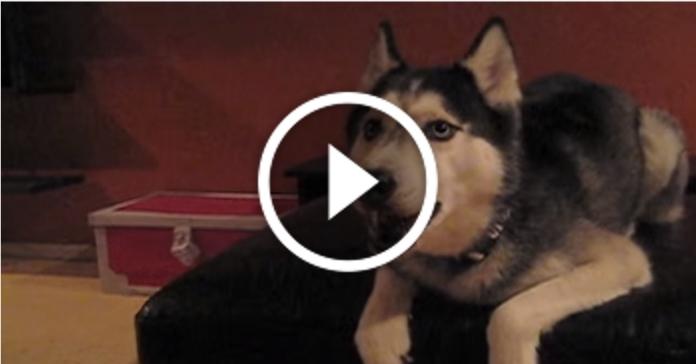 24 тварини, які вміють говорити як люди