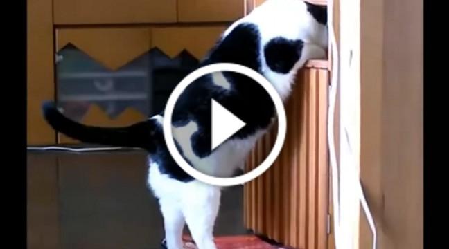 Товстий кіт намагається влізти у шафу. Дивіться до кінця