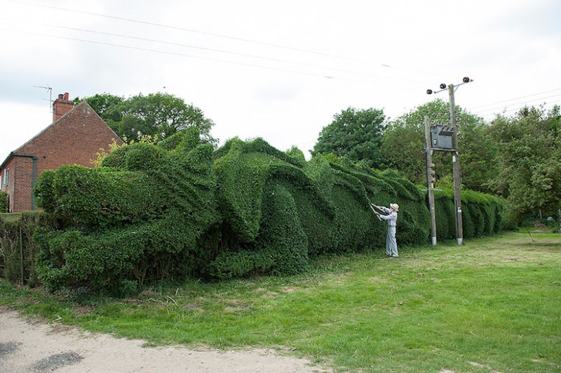 JohnBrooker_hedge_dragon_03