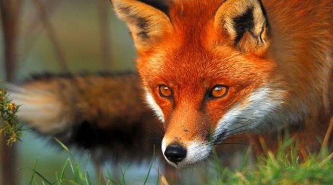 На яку дику тварину ви подібні? Тест