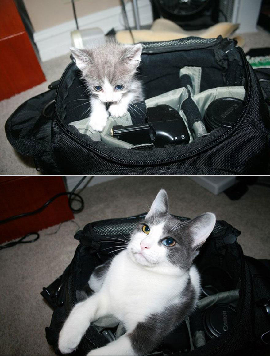cute-pets-before-after-cat-camera-bag