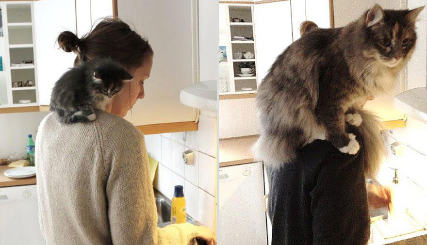 cute-pets-before-after-cat-kitchen