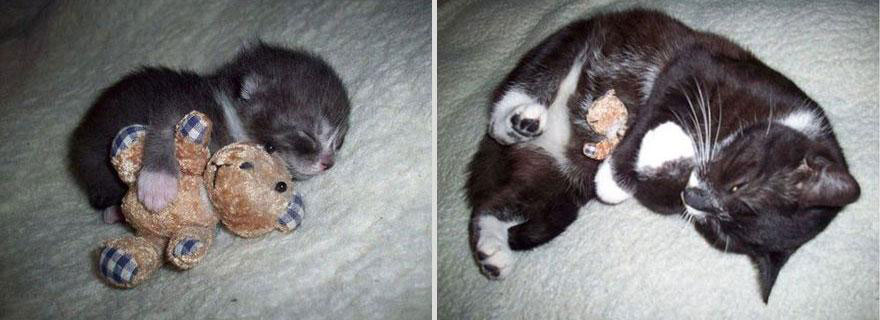 cute-pets-before-after-cat-toy