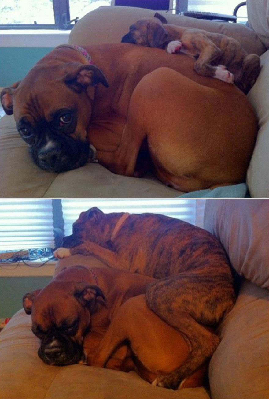 cute-pets-before-after-couch