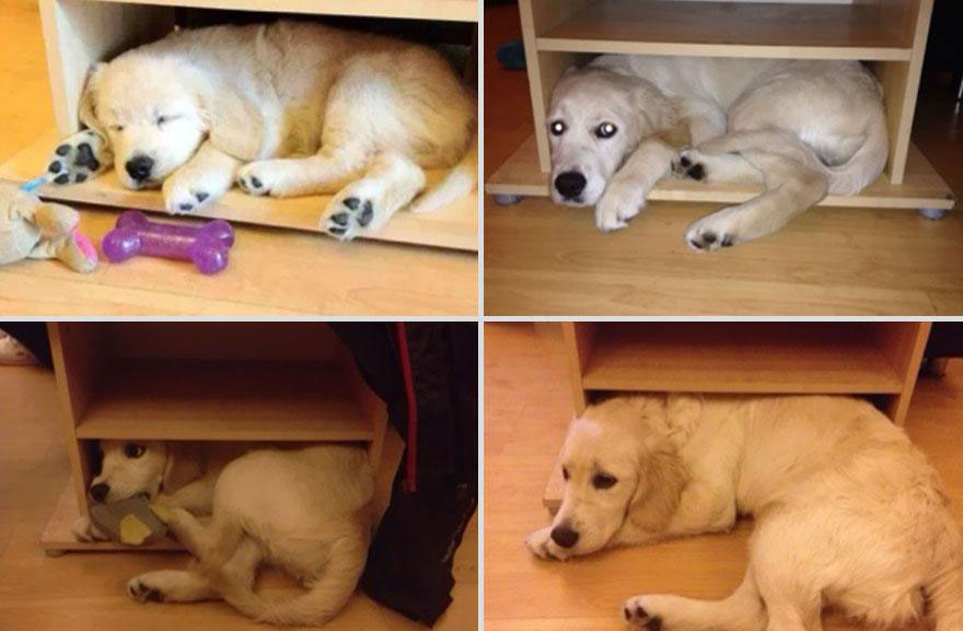cute-pets-before-after-dog-cant-fit