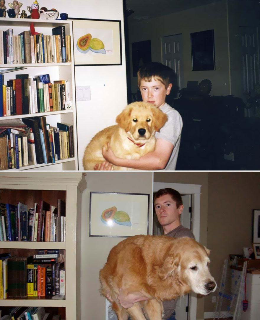 cute-pets-before-after-heavy-dog