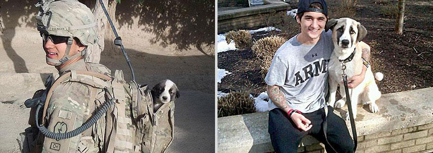 cute-pets-before-after-soldier-dog