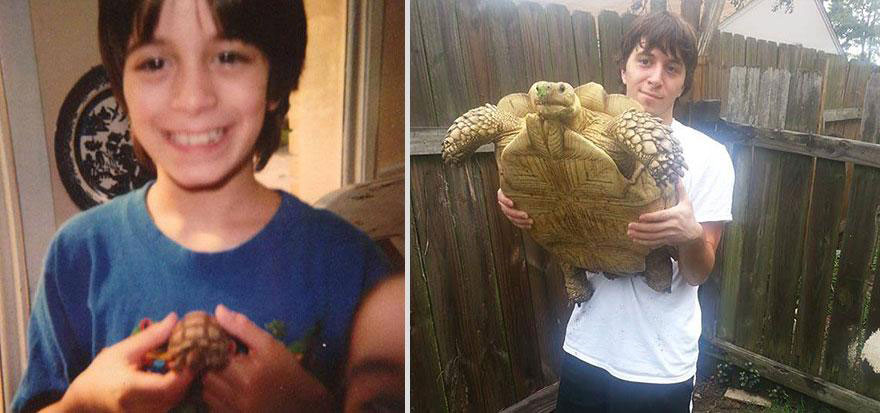 cute-pets-before-after-turtle