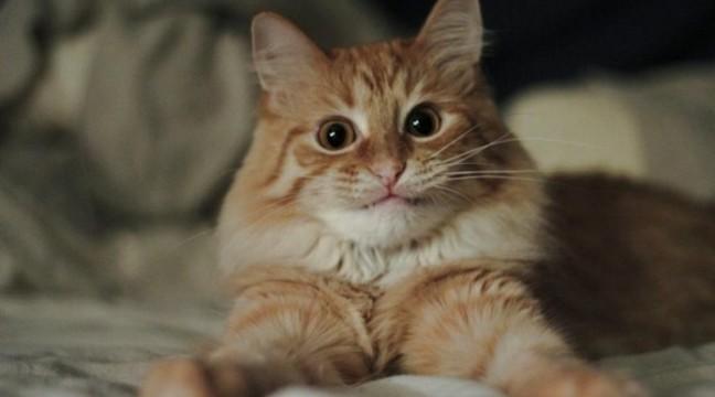 Якби коти були людьми