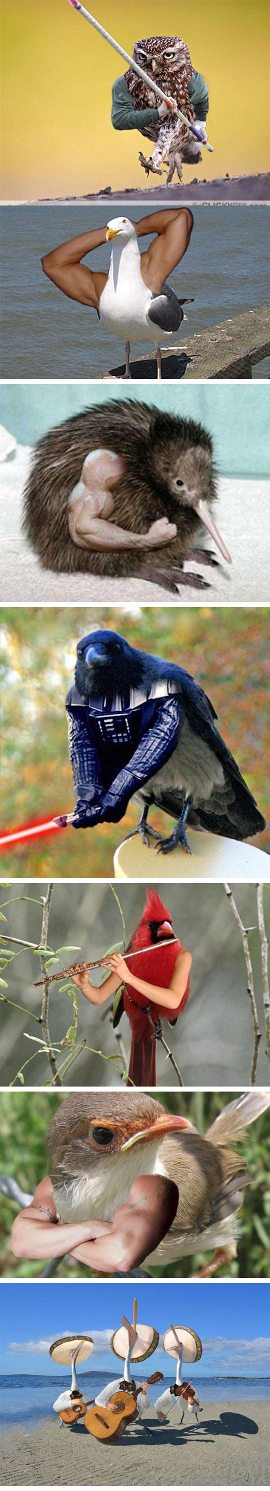 funny-birds-human-arms-owl