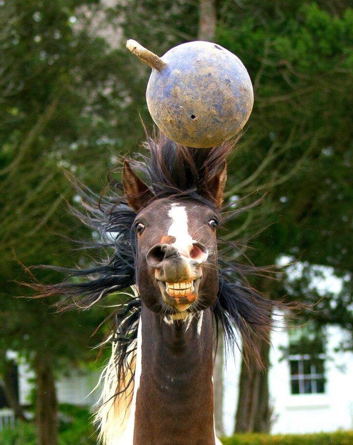 funny-horse-selfie-pics