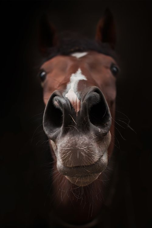 funny-nose-horse-face