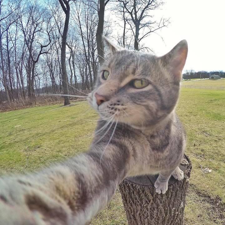 manny-selfie-cat-fy-2