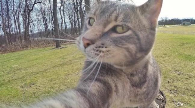 Кіт-селфач