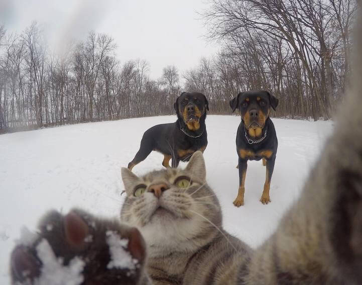 manny-selfie-cat-fy-9