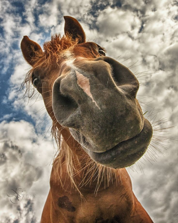 nose-horse-face-funny