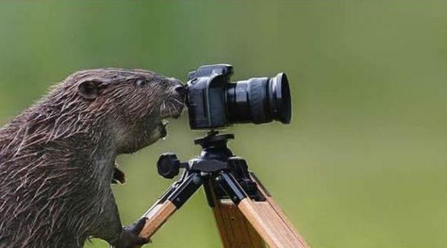 Обережно, вас знімає неприхована камера!