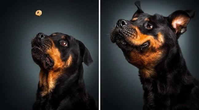 Кумедні голодні собаки на фото Крістіана Вілера