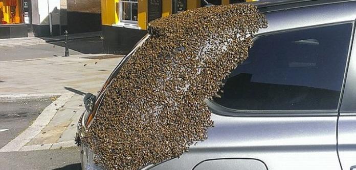 Рій бджіл два дні переслідував позашляховик, у якому застрягла бджола-матка