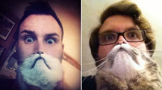Ось як треба фотографуватися з котами