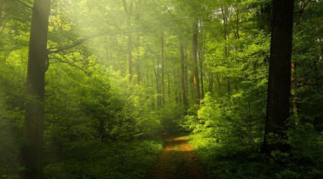 37 років праці: як одна людина виростила величезний ліс