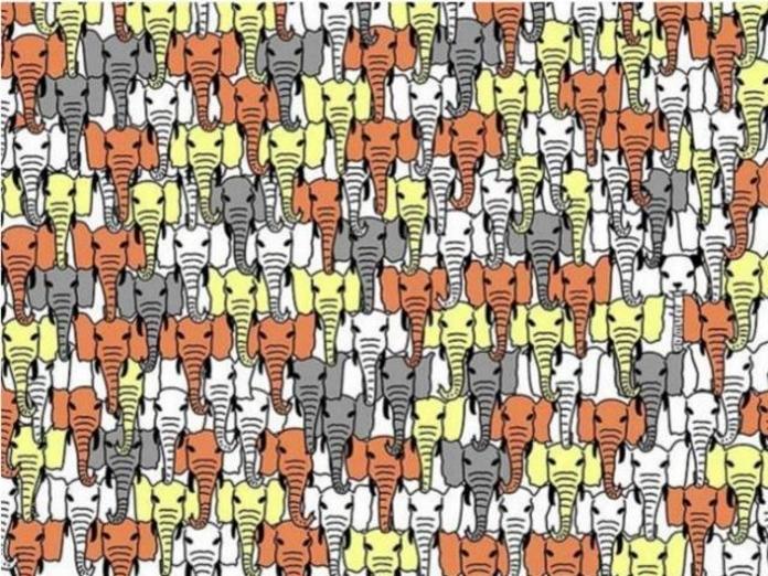 Тест: Знайди панду!