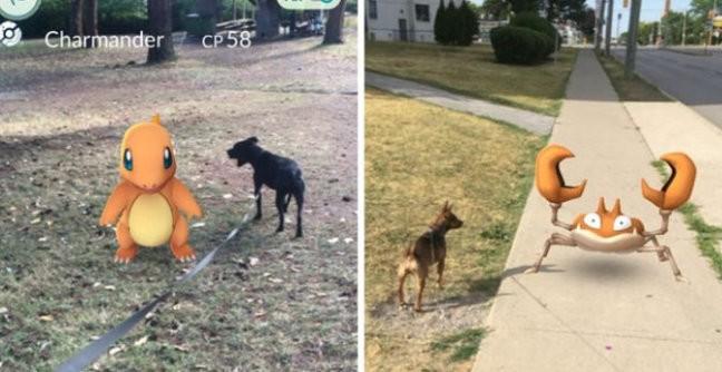 Гра Pokemon Go допомогла притулку набрати волонтерів для вигулювання собак