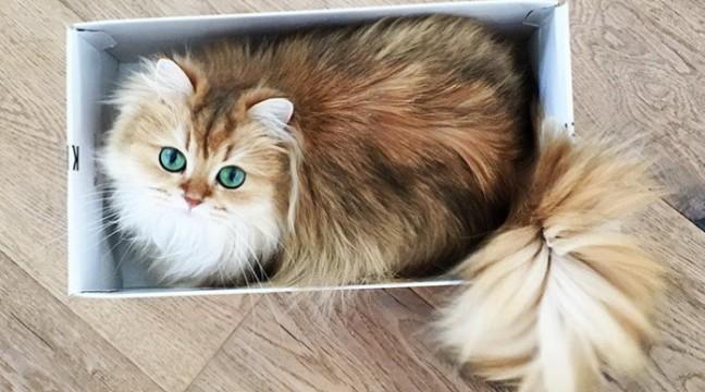 Ось як виглядає найфотогенічніший кіт у світі