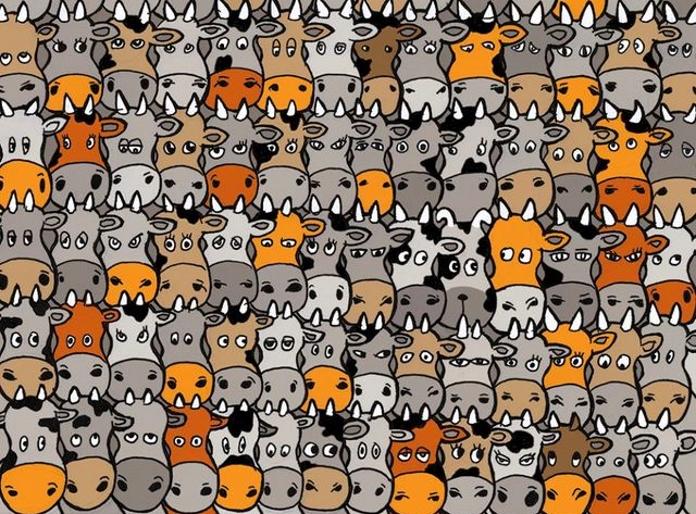 Нова загадка з інтернету: зможете знайти собаку між коровами?