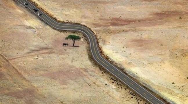 15 чудових фото, які демонструють справжню повагу до живої природи