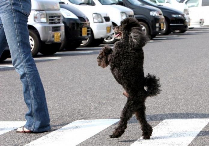 15 собак, які начхали на стереотипи і почали ходити як люди