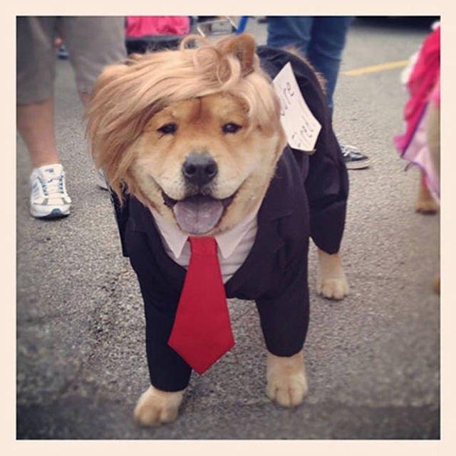 Dogald-Trump