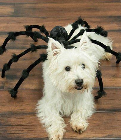 Spider-Dog-Spider-Dog