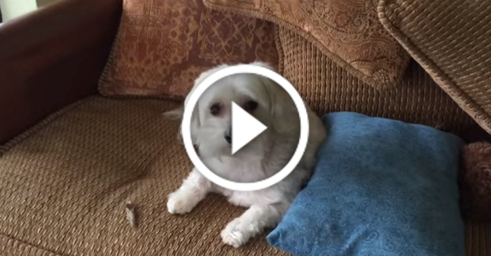 Господар сварив пса за безлад, але тут зайшла інша собака. Ми плакали! :D