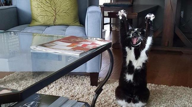 """""""Лапи вгору!"""" Кіт з дивною звичкою звів з розуму інтернет"""