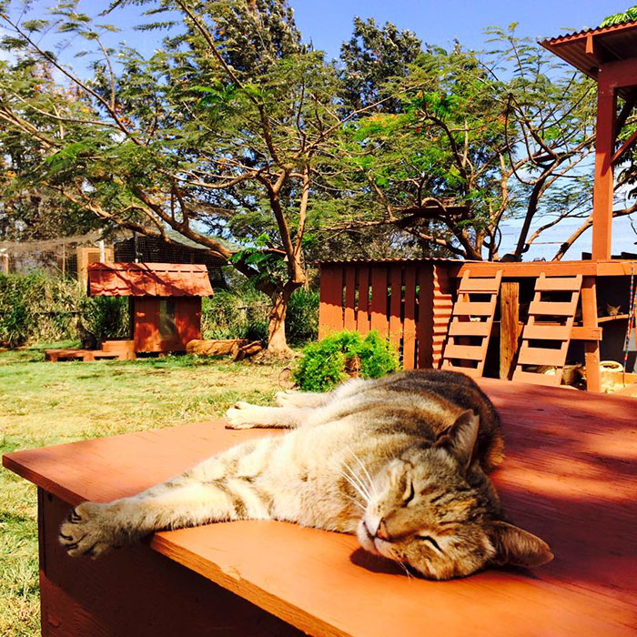 lanai-cat-sanctuary-hawaii-25