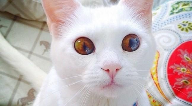 11 дивовижних котів, в чиїх очах цілий Всесвіт