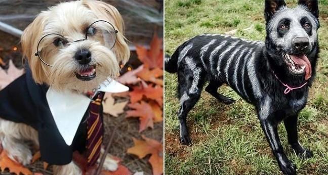 15 собачих костюмів на Хеловін, які зроблять із вашого пса справжню зірку