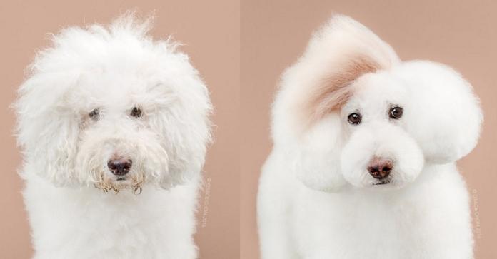 Великі перевтілення: собаки до і після стилістів