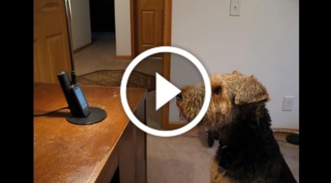 Пес так сильно скучив за господинею, що не втримався і подзвонив їй
